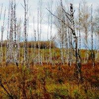 в болоте голые березки :: Александра Полякова-Костова