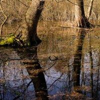 Весна :: Оксана Лада