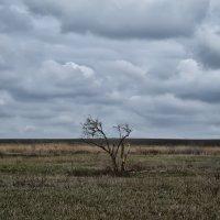 Одиночество :: Marina Timoveewa