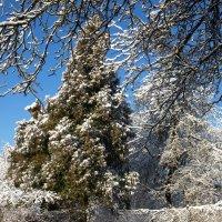 Отголоски зимы :: Геннадий Кульков