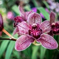 орхидея :: Евгений U