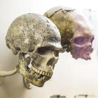 Кости наших предков :: Андрей Исаев