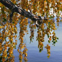 Осенний занавес :: Татьяна Соловьева