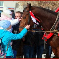 Прости, лошадка, загоняли тебя.. :: Андрей Заломленков