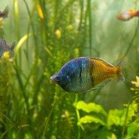 рыбка :: Владимир Притчин