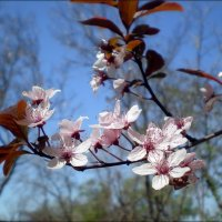 Нежность весны :: Татьяна Пальчикова