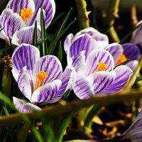 Красиво цветут ...Вон та группа в полосатых купальниках... :: Александр Корчемный