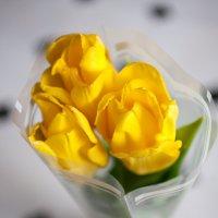 тюльпаны :: Вячеслав