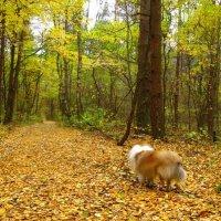 Куда уходит осень? :: Tatiana Golubinskaia
