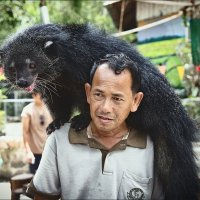 Работник тайского зоопарка с бинтуронгом :: Ирина Лепнёва