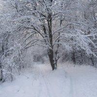 Зимнее :: Алёнка Шапран