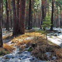 Забыты снежные метели... :: Лесо-Вед (Баранов)