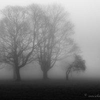 Силуэты в  тумане :: Aleksandr Papkov