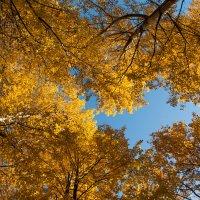 осень :: Edita Rimkute