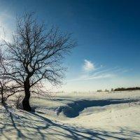 Свет и тени... :: Борис Кононов