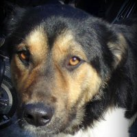 Пёс ждёт сострадания . :: Мила Бовкун