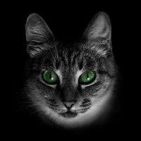 Домашнее животное :: Артём Кыштымов