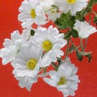 Цветы :: scherbinator SHCHERBYNA