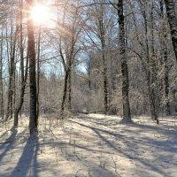 Ожил лес от солнца :: Милешкин Владимир Алексеевич