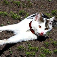 Ну? И подумаешь, в огороде я лежу!.. :: Кай-8 (Ярослав) Забелин