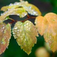 water-drops :: ~ Backstage ~ N.