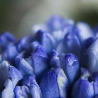 Синие цветы :: Юля Колосова