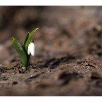 Первый, в первый день весны. :: Алексей Хаустов