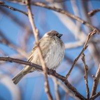 Птищка :: Иван Кононов