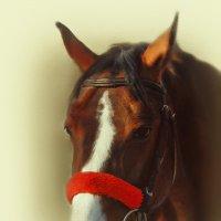 портрет лошади :: Жанна ..