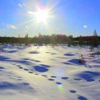 Следы на снегу. :: Галина Полина