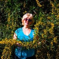 А вокруг цветет мимоза :: Николай Волков