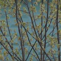 Весенние растки :: Светлана Shtabel