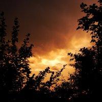 Закатное небо сквозь ветви деревьев :: Сергей Тагиров