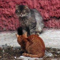 Весенние кошки :: Andrew