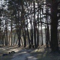 В весенем лесу :: Владимир Бровко
