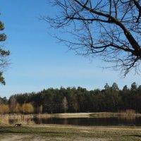 Вид на лесное  озеро :: Владимир Бровко