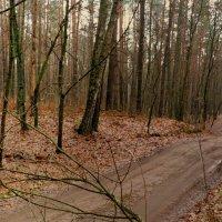 незеленый лес :: Александр Прокудин