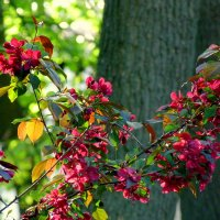 майское цветение :: Александр Прокудин
