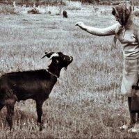Этот козлик был очень сердитый, и всё же мы с ним как-то договорились мирным путём. 1967 год :: Нина Корешкова