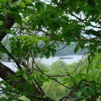 Вид на реку Белая сквозь деревья :: Сергей Тагиров