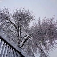 Был снегопад :: °•●Елена●•° Аникина♀