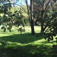 Квадратная тень от дерева) :: Булаткина Светлана