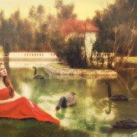 Лебединое озеро :: Ирина Слайд