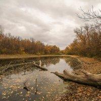 осень на ерике :: Андрей Куницын