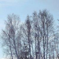 Неторопливая весна :: A. SMIRNOV