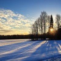 Утренний свет :: Валерий Талашов
