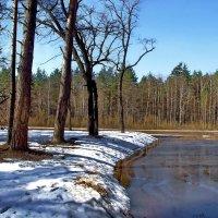 Ещё одна весна на белом свете... :: Лесо-Вед (Баранов)