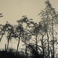 ёжик в тумане :: Alima Назарова