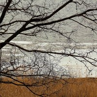 Невские берега-2 :: Весна