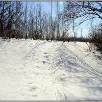 Ещё не всё растаяло в лесу.. :: Андрей Заломленков